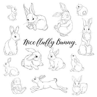Illustration vectorielle d'un lapin moelleux mignon
