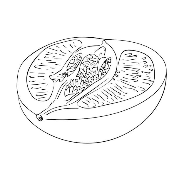 Illustration vectorielle, moitié isolée du pomelo en couleurs noir et blanc, dessin peint à la main