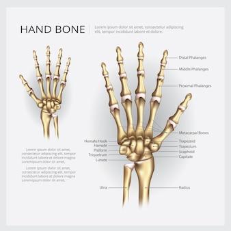 Illustration vectorielle d'os de la main