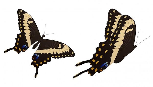 Illustration vectorielle de papillon machaon noir