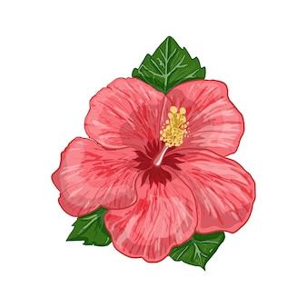 Illustration vectorielle d'une plante d'hibiscus fleurs et feuilles d'une plante sur fond blanc isolé