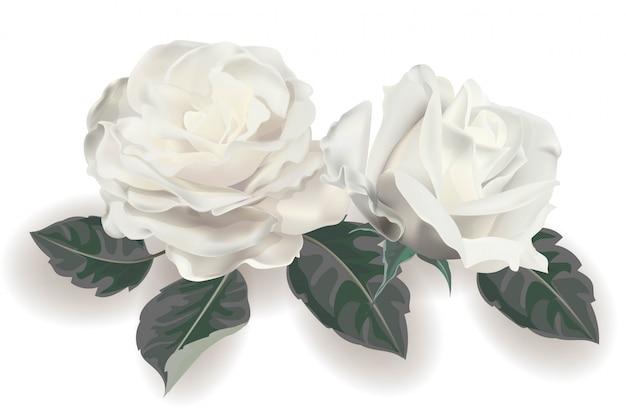 Illustration vectorielle réaliste rose blanche