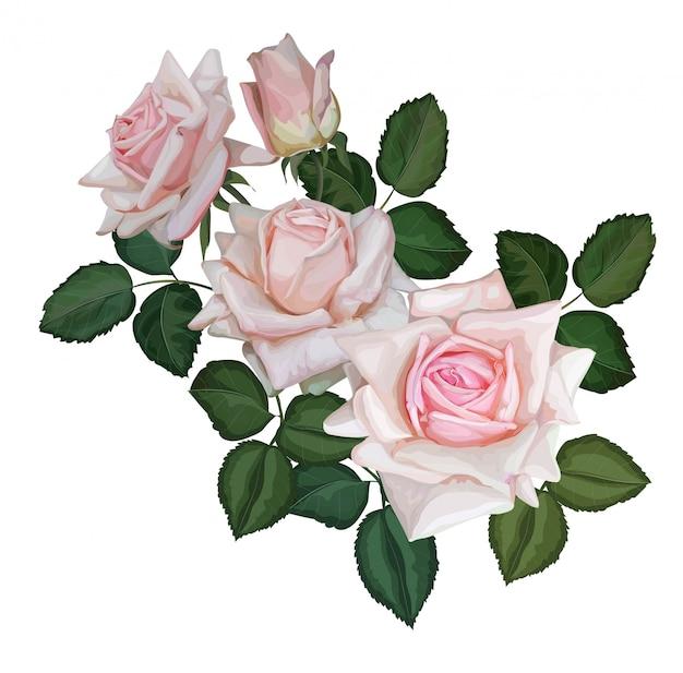 Illustration vectorielle de rose bouquet couleur rose