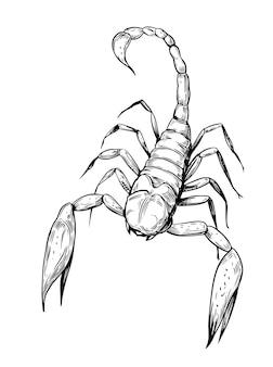 Illustration vectorielle de scorpion croquis. fond transparent contour noir