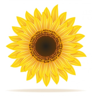 Illustration vectorielle tournesol