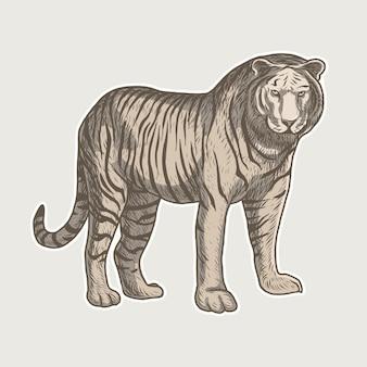 Illustration vectorielle vintage tigre détaillée dessinée à la main