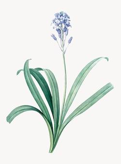 Illustration vintage de bluebell espagnol