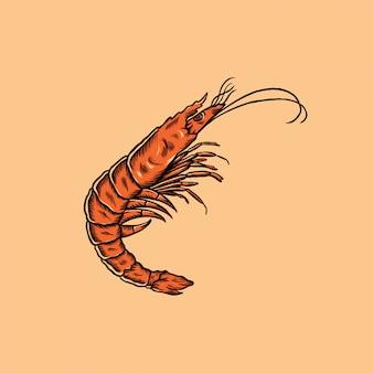 Illustration vintage de crevettes dessinés à la main