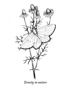 Illustration vintage de papillon dessiné à la main d'encre sur la plante de camomille.