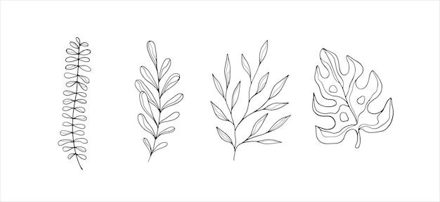 Illustrations botaniques simples dessin au trait éléments de conception minimalistes art végétal élégant