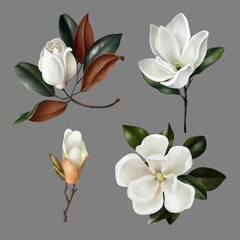 Illustrations dessinées à la main de fleurs et de bourgeons de magnolias réalistes mignons