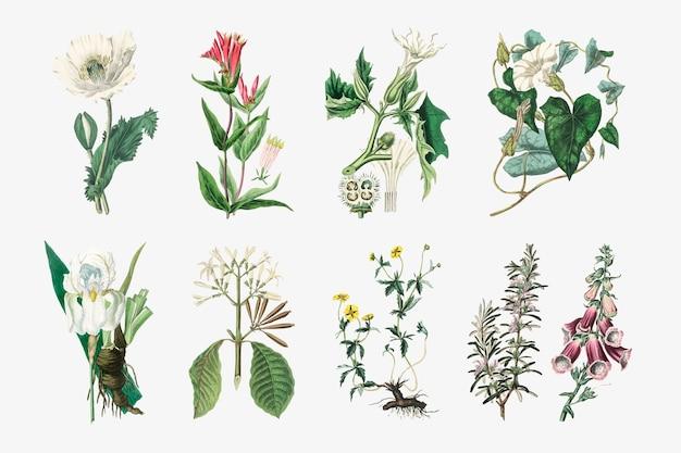 Illustrations de jeu de plantes botaniques vectorielles