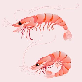 Illustrations vectorielles isolés de crevettes roses.
