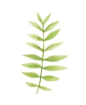 Illustrations vectorielles de plantes aquarelles pour les invitations de mariage et la conception graphique