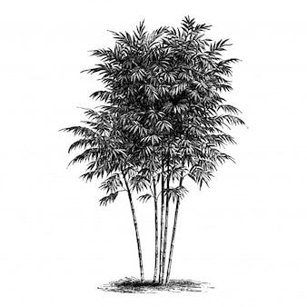 Illustrations vintage de bambou