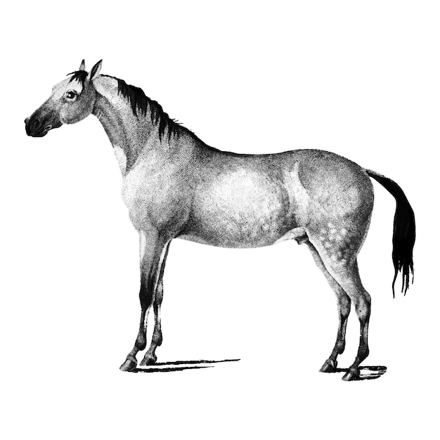Illustrations vintages de cheval