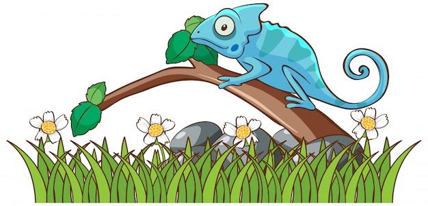 Image isolée de caméléon sur branche