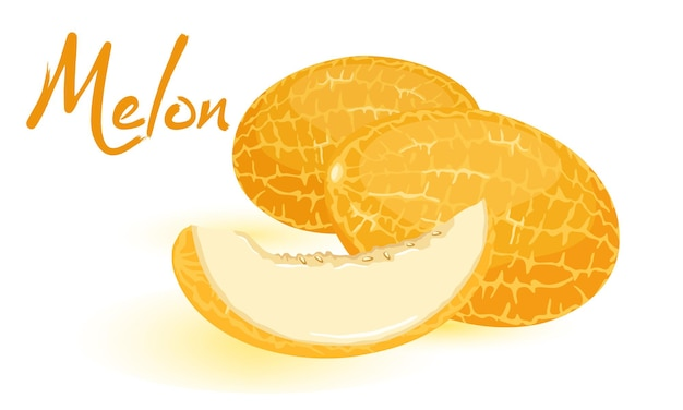 Image isolée montre des melons mûrs orange avec un style de dessin animé de tranche sucrée juteuse coupée sur fond blanc
