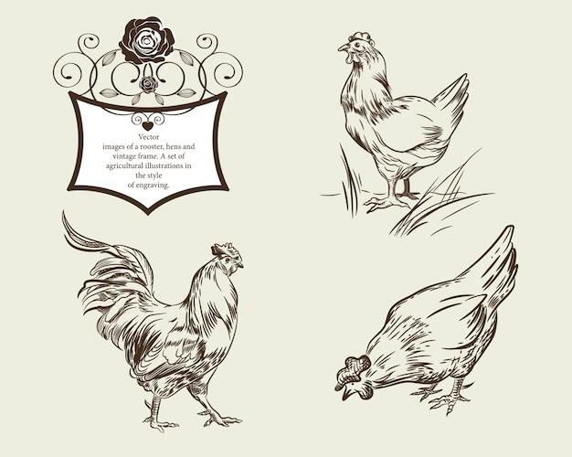 Images vectorielles d'un coq poules et cadre vintage