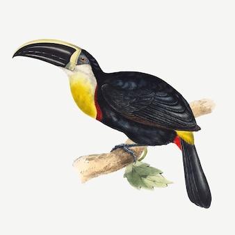 Impression d'art animalier vectoriel toucan, remixé à partir d'œuvres d'art de john gould