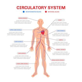 Infographie du système circulatoire dessiné à la main