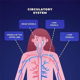 Infographie du système circulatoire à gradient