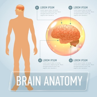 Infographie médicale du cerveau