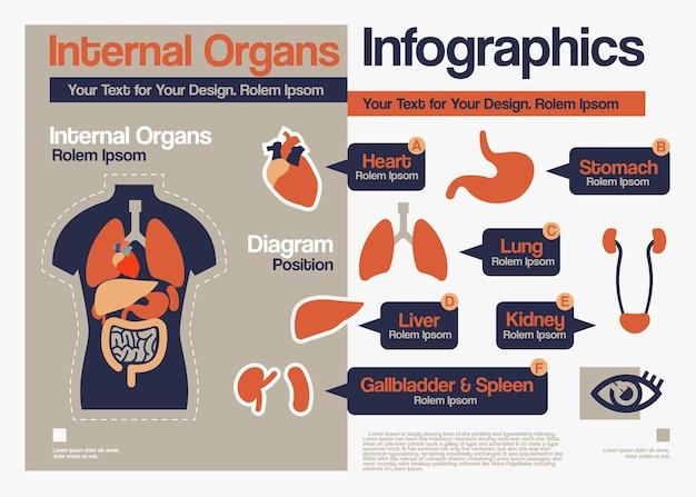 Infographie des organes internes.