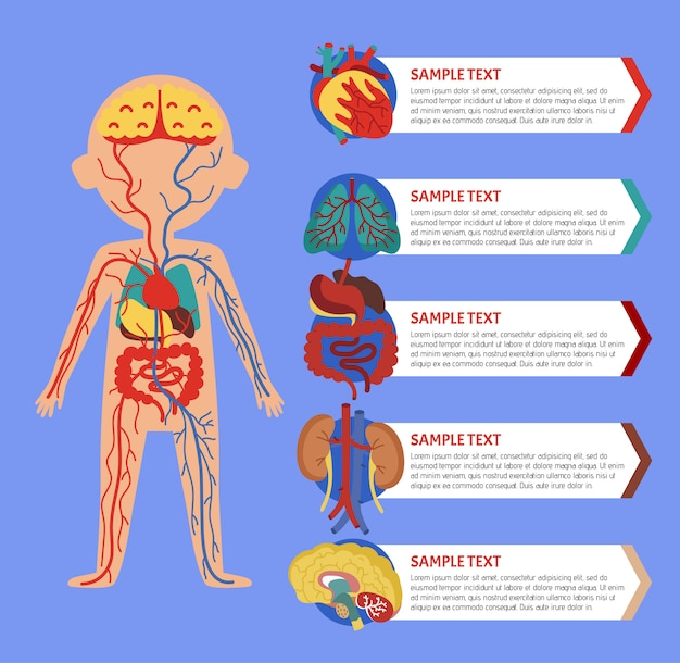 Infographie de la santé avec l'anatomie du corps humain