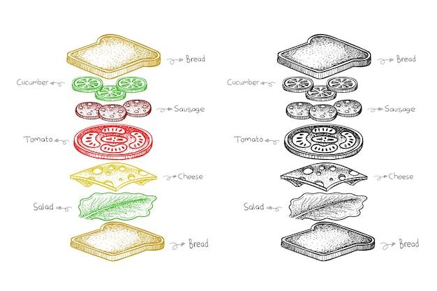 Ingrédient sandwich, illustration alimentaire dans un style dessiné à la main