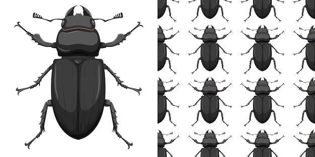 Insecte coléoptère et fond transparent