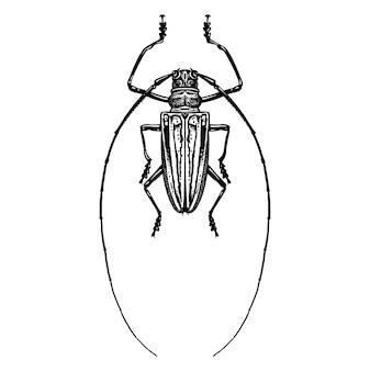 Insecte coléoptère isolé. croquis noir et blanc.
