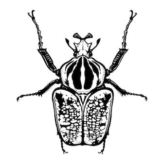 Insecte coléoptère isolé. goliath. croquis noir et blanc.