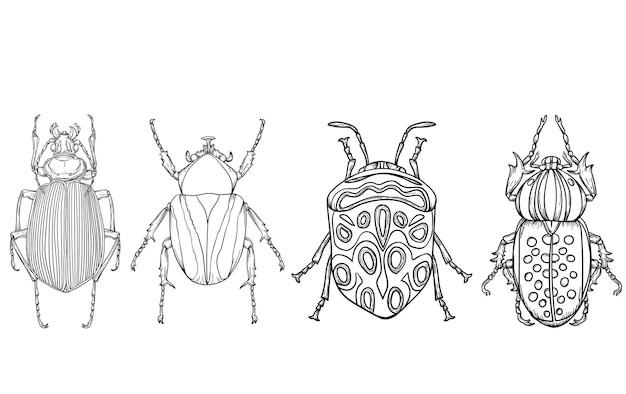 Insecte coléoptères livre de coloriage ilustration