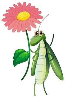 Insecte vert tenant une fleur rose sur fond blanc
