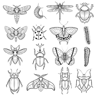 Insectes black white line icons set