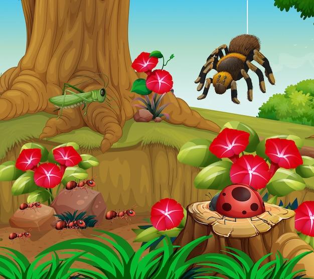 Insectes dans le jardin