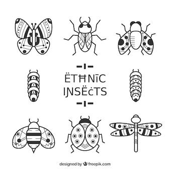 Insectes décorées