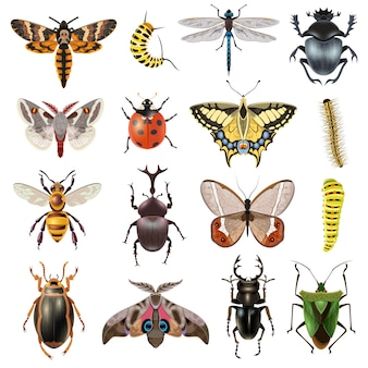 Insectes icons set