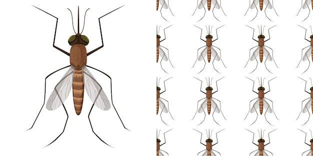 Insectes moustiques isolés sur fond blanc et sans soudure