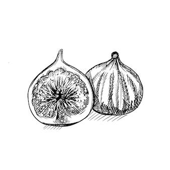 Insigne de figue gravé. logo de fruits. fruit de croquis dessiné main gravé de vecteur
