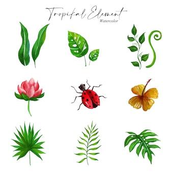 Inspirez-vous de notre icône d'illustration d'aquarelle qui est le thème des éléments tropicaux avec l'application de belles couleurs sur fond blanc.