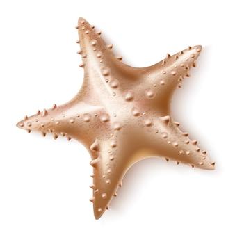 Invertébré de mer d'étoile de mer réaliste pour la marine
