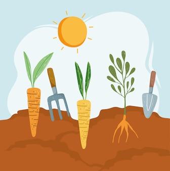 Jardin de carottes et de plantes