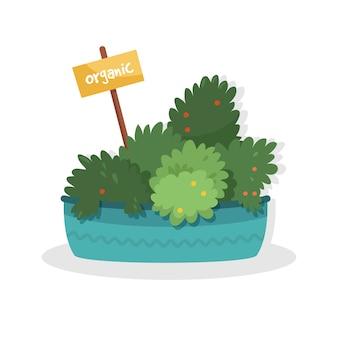 Jardin culinaire bio sur le rebord d'une cuisine. herbes en pot dans une boîte à fleurs bleues. plantes domestiques en pot d'argile avec étiquette marqueur de graines. illustration sur blanc.