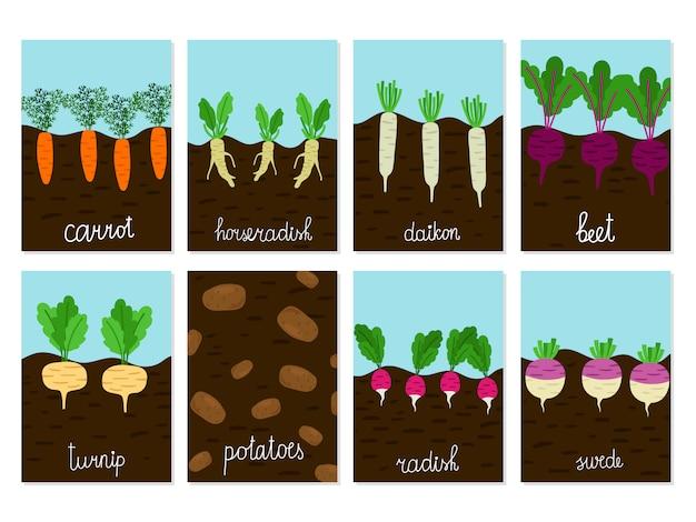 Jardin de légumes racines de plus en plus de cartes