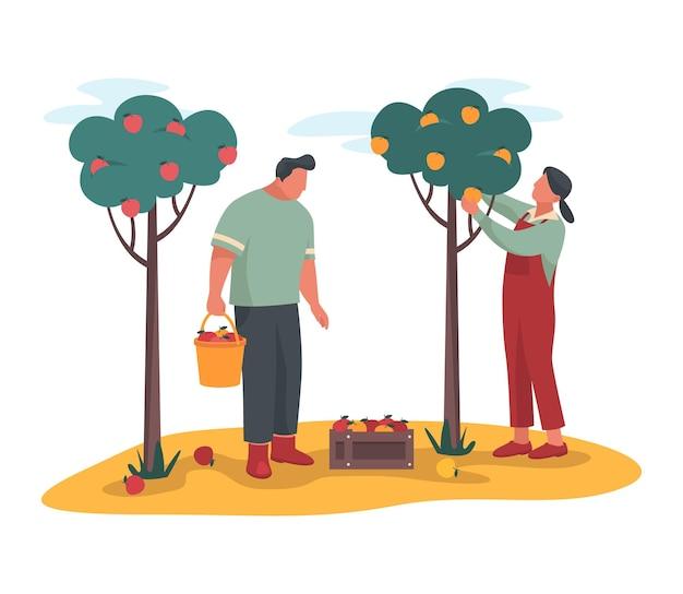 Les jardiniers cueillent des pommes ou ramassent une récolte mûre