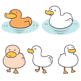 Jeu de canard