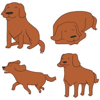 Jeu de chien, golden retriever vectorielles