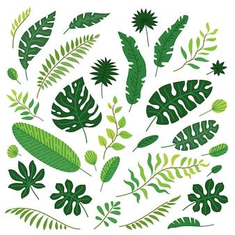 Jeu de dessin animé de vecteur de feuilles tropicales isolées
